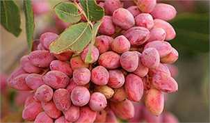 3 مانع عرضه محصولات کشاورزی در بورس