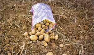 قیمت گوشت و سیب زمینی کاهش مییابد؟!