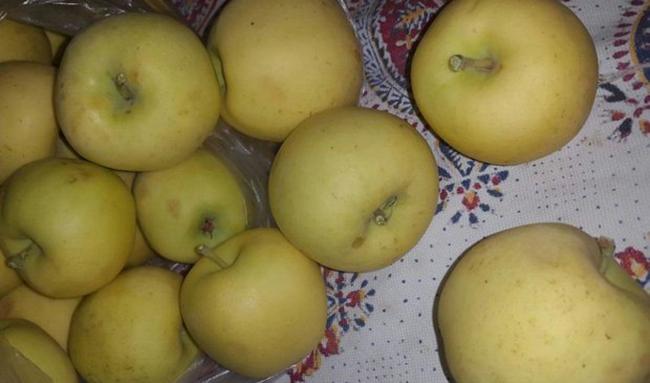 واکنش تولیدکنندگان به فساد میوههای تنظیم بازاری