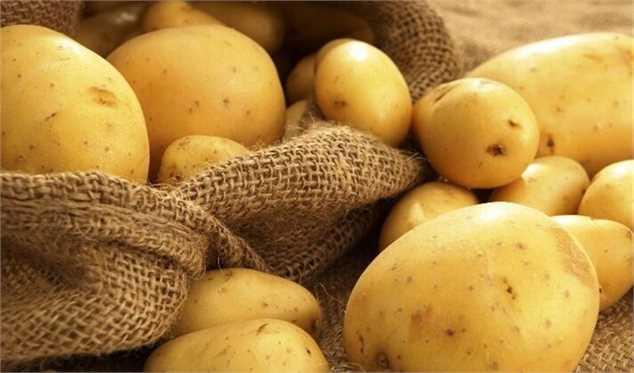 ایران رتبه سیزدهم تولید سیب زمینی جهان را دارد