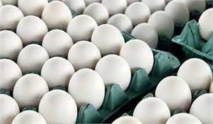 میزان صادرات تخم مرغ به ١٠ هزارتن رسید