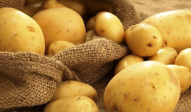 صادرات سیب زمینی آزاد شد