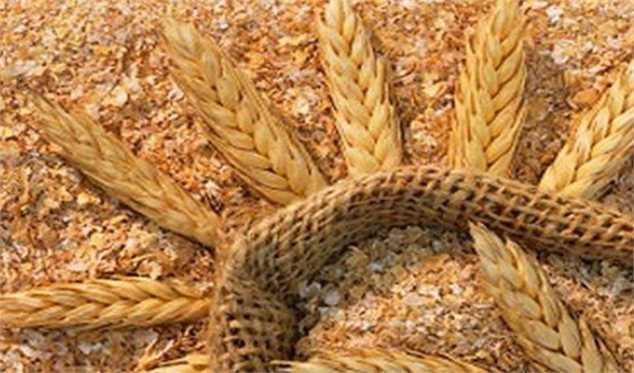 اعلام قیمت جدید محصولات کشاورزی در نامه حجتی به نوبخت/ قیمت گندم  ۲۲۹۵ تومان پیشنهاد شد