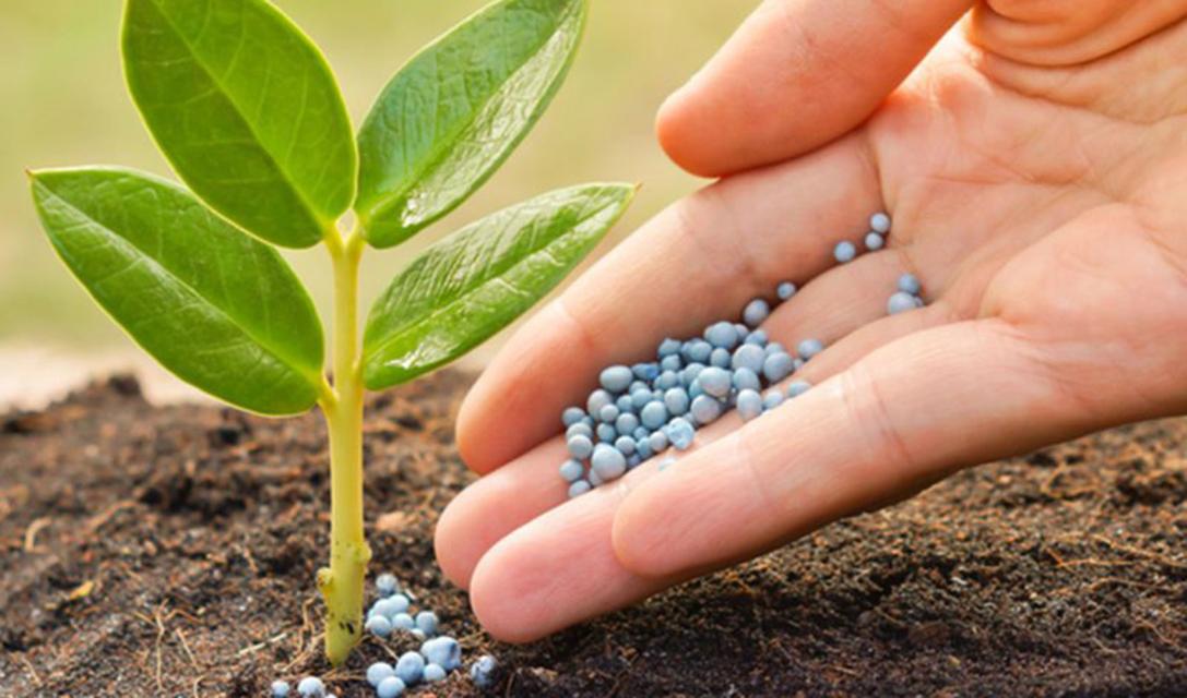 محکوم به مصرف کودهای کمکیفیت دولتی هستیم/ نظارتی بر کیفیت سمهای کشاورزی تولید داخل نیست