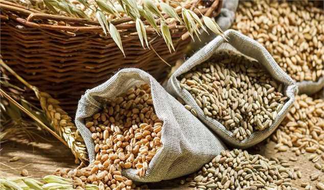 آزمایش استاندارد گندم راهی برای پایان دادن به موضوع اختلاط گندم با شن و خاک