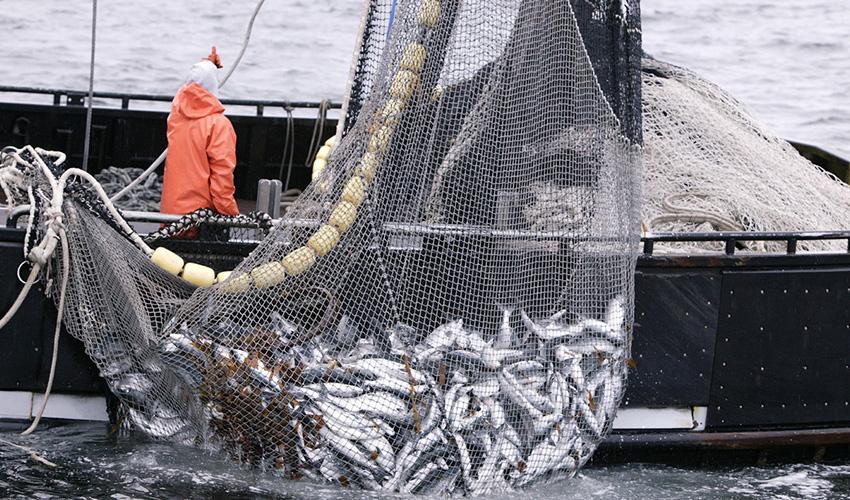 رشد ۴۰ برابری تولید آبزیان در ایران/ ظرفیت تولید یک میلیون تن ماهی در دریا وجود دارد
