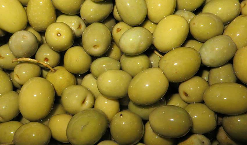 تولید میوه زیتون به ۱۲۰ هزار تن رسید/ واردات روغنهای بیکیفیت زیتون در بازار
