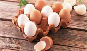 متعادل شدن قیمت تخممرغ جلوی ضرر تولیدکنندگان را گرفت