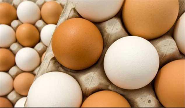 تخم مرغ ارزان شد/ صادرات روزانه ۱۵۰ تن تخم مرغ به بازارهای هدف