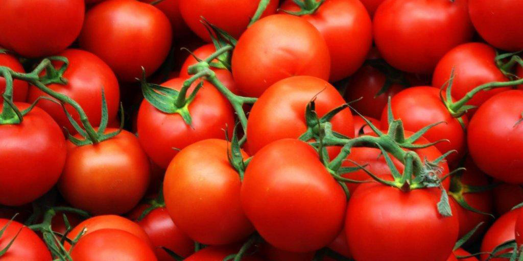 سرما بازهم وضعیت گوجهفرنگی را قرمز کرد