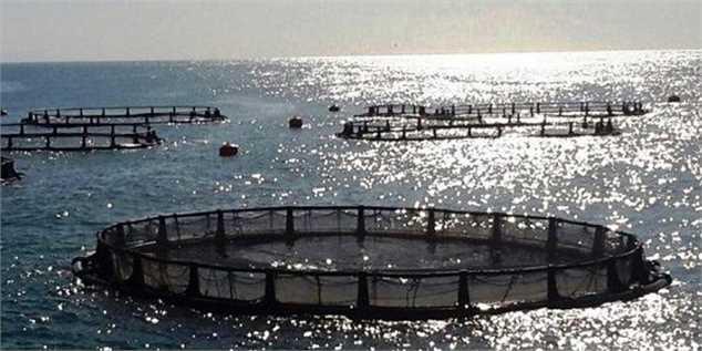 ارز آوری ۸۰۰ میلیون دلاری در مزرعههای «پرورش ماهی در قفس»
