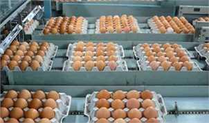 صادرات مرغ و تخممرغ به کویت آزاد شد + سند