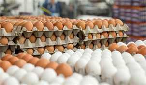 تولید روزانه ۲۸۰۰ تا ۲۹۰۰ تن تخم مرغ در کشور