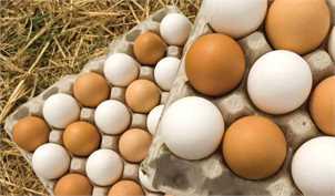 ۲۰ هزار تن تخممرغ صادر شد