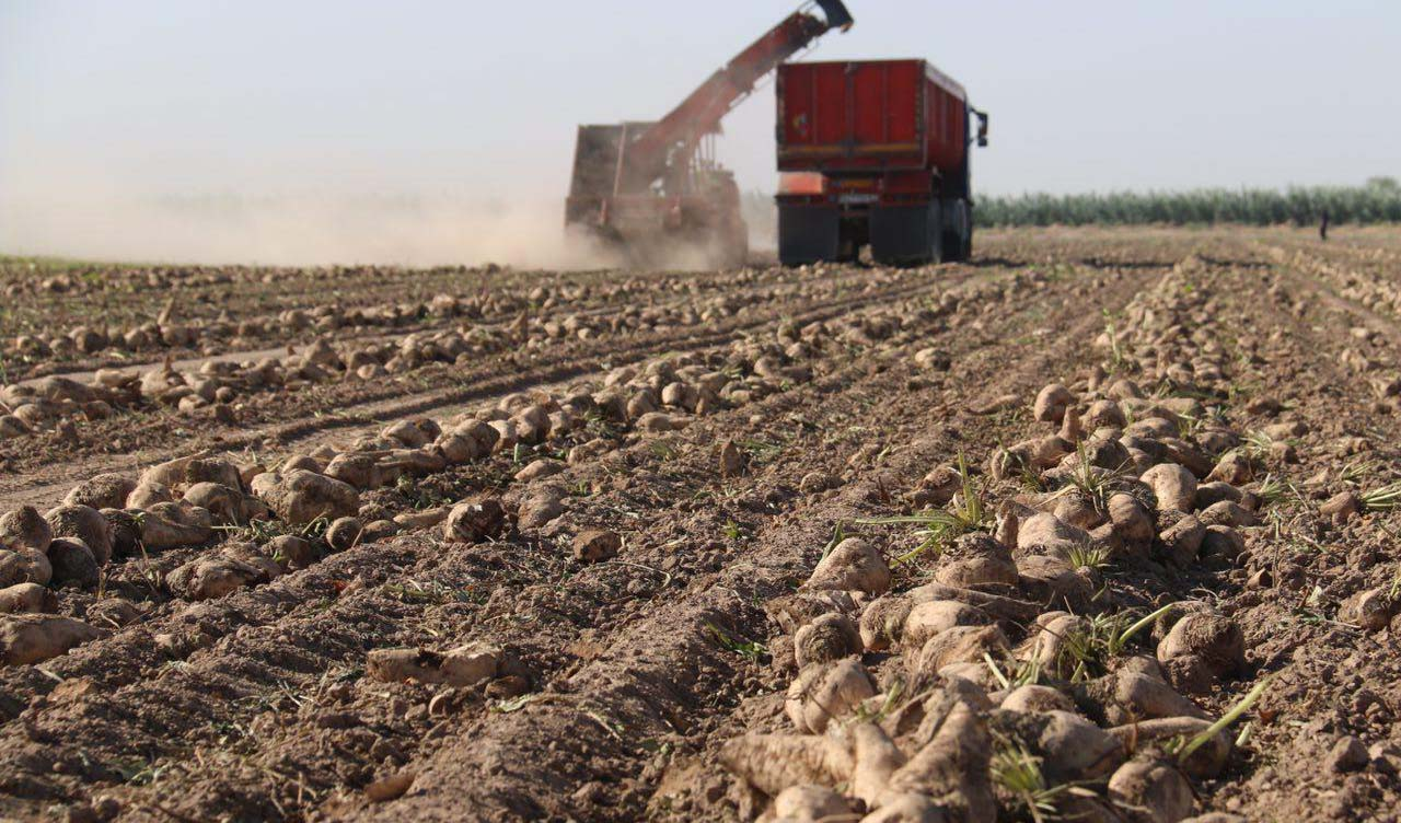 تولید زراعی ۱.۵ میلیون تن شکر در برنامه سال آینده