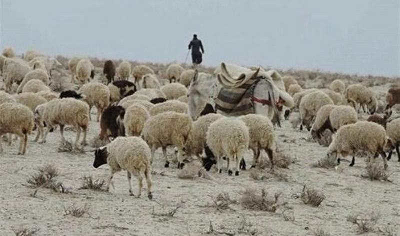 چرا واردات دام زنده از قزاقستان متوقف شد؟