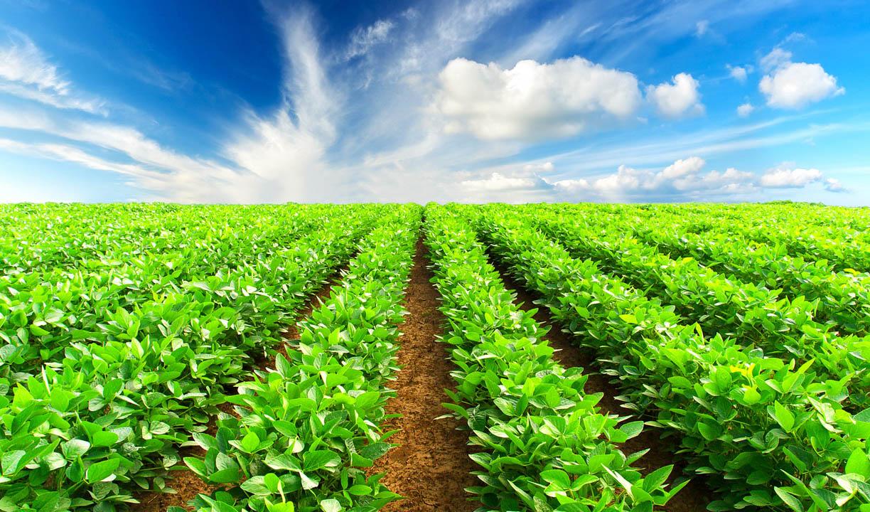 راهحل تجاریسازی محصولات کشاورزی