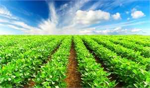 صادرات کشاورزی تامین مالی میشود