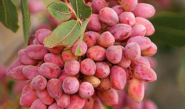 تولید محصولات باغی به ۲۳ میلیون تن رسید