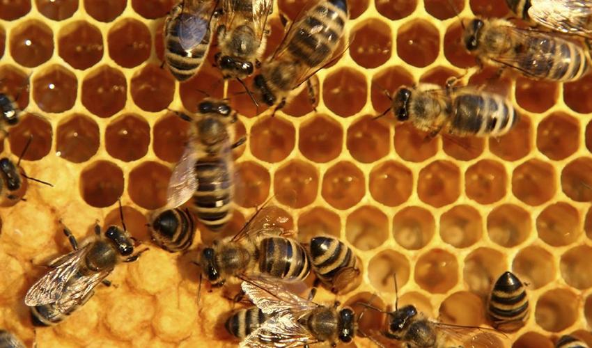 ایران رتبه سوم تولید عسل جهان را دارد