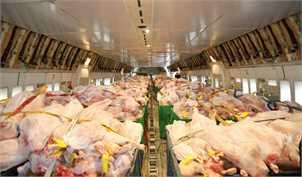قیمت مرغ سقوط کرد / نرخ هر کیلو مرغ ۱۲ هزار و ۹۰۰ تومان