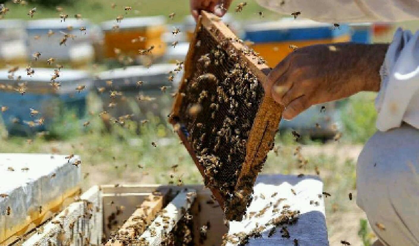 برندسازی مانع دلال بازی و سوداگری در بازار عسل