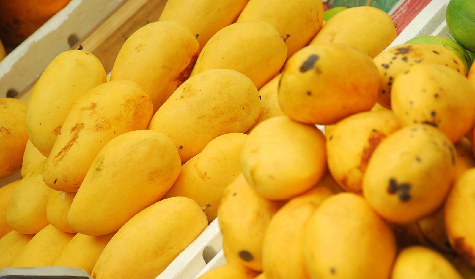 واردات انبه از فیلیپین آزاد شد