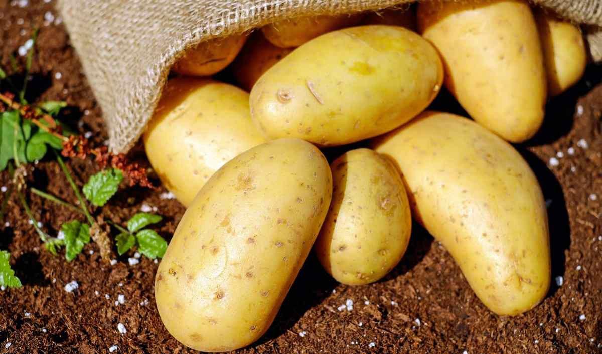 کنترل افزایش قیمت سیب زمینی در بازار/ سرما مانع تولید سیب زمینی نشد