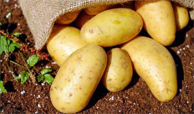 کنترل افزایش قیمت سیب زمینی در بازار/ سرما مانع تولید سیب زمینی نشدغذایی و کشاورزی