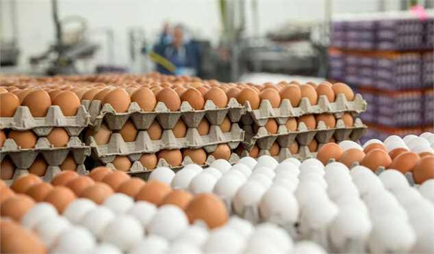 صادرات تخم مرغ از سرگرفته شدغذایی و کشاورزی