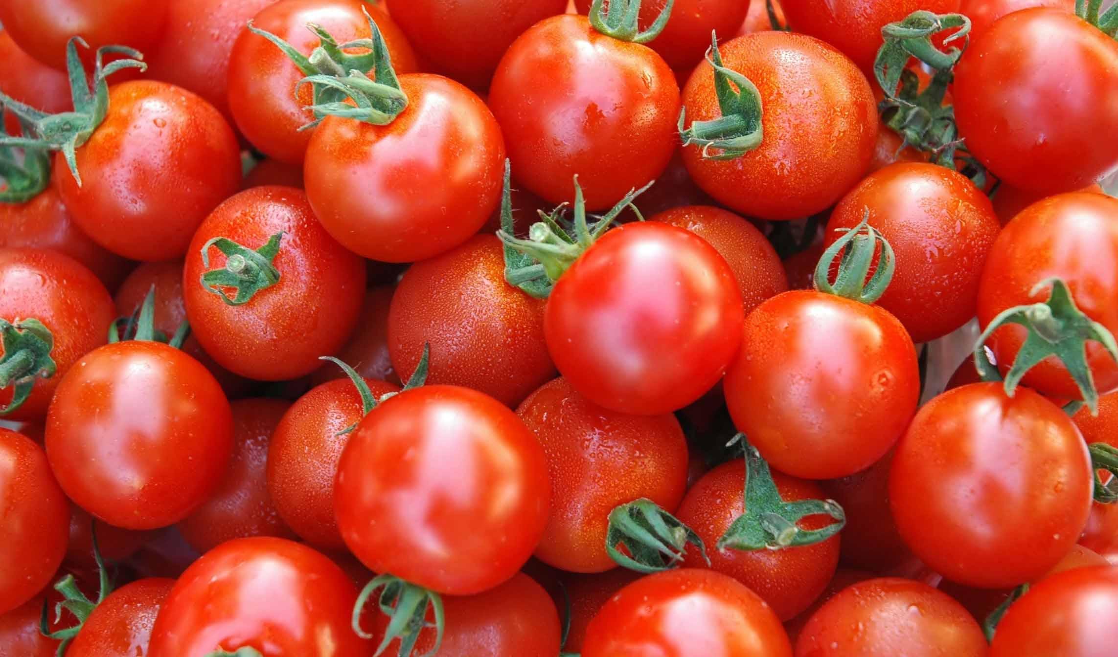 تسویه صددرصدی مطالبات گوجهکاران