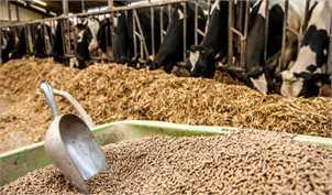 تصمیم عجیب وزارت صنعت برای صادرات خوراک دام و طیور یارانهای+ سند