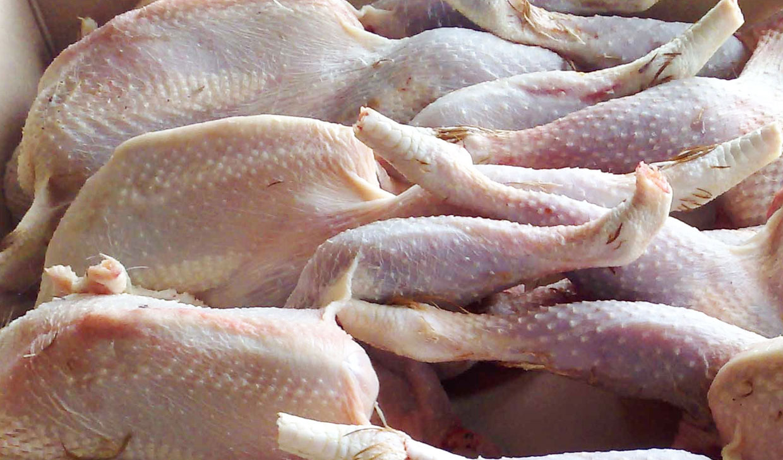 مرغ زیر وزن ۱۸۰۰ گرم مرغداران بدون محدویت خریداری می شود+ سند