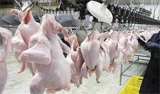 خرید تضمینی ۶۰ هزار تن مرغ مازاد از مرغداران کشور