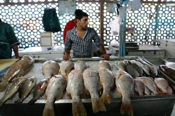 بازار ماهی و میگو زیر تیغ تیز کرونا