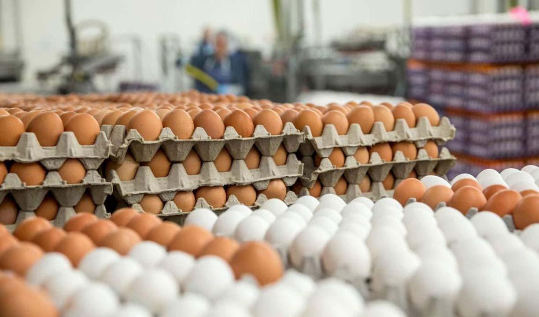 ثبات نرخ تخم مرغ در بازار؛ قیمت تمام شده تخم مرغ به ۱۲ هزار تومان رسید