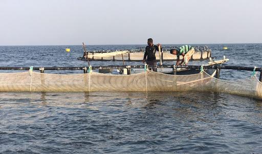 استفاده از گونههای بومی برای پرورش ماهی در قفس