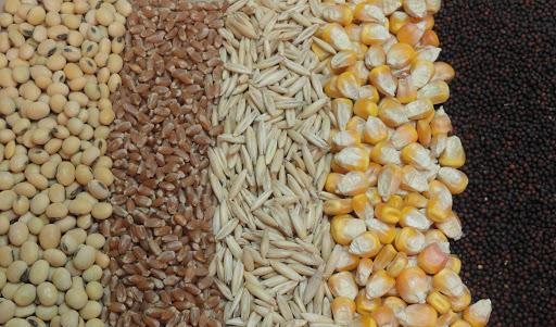 وزیر جهاد کشاورزی: جلسه فوری تنظیم بازار نهاده های دامی برگزار می شود
