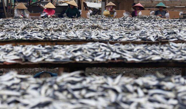 هشدار فائو نسبت به افزایش صید بیرویه ماهی