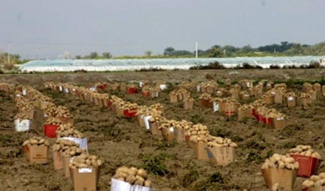 چرا محصولات روی دست کشاورزان مانده است؟