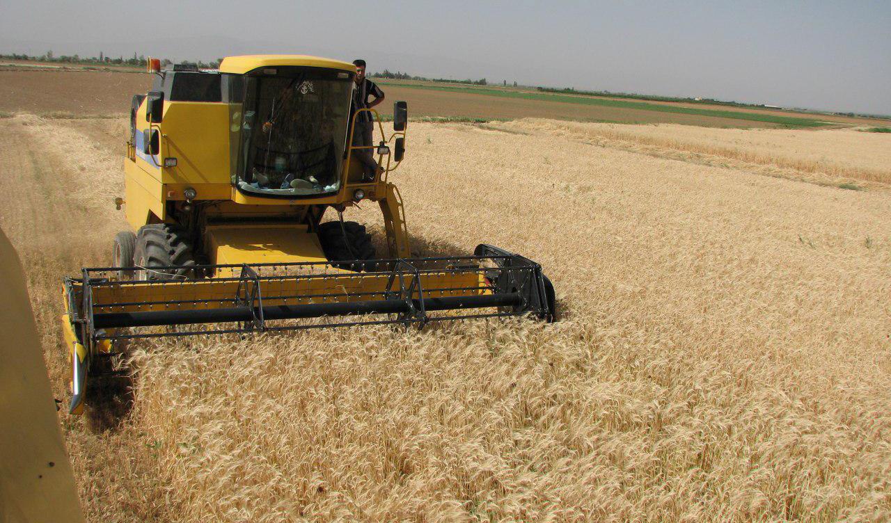 خرید گندم از کشاورزان سرعت گرفت