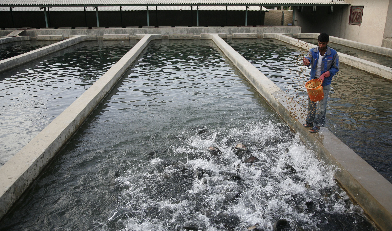 جزئیات طرح خرید توافقی ماهی اعلام شد