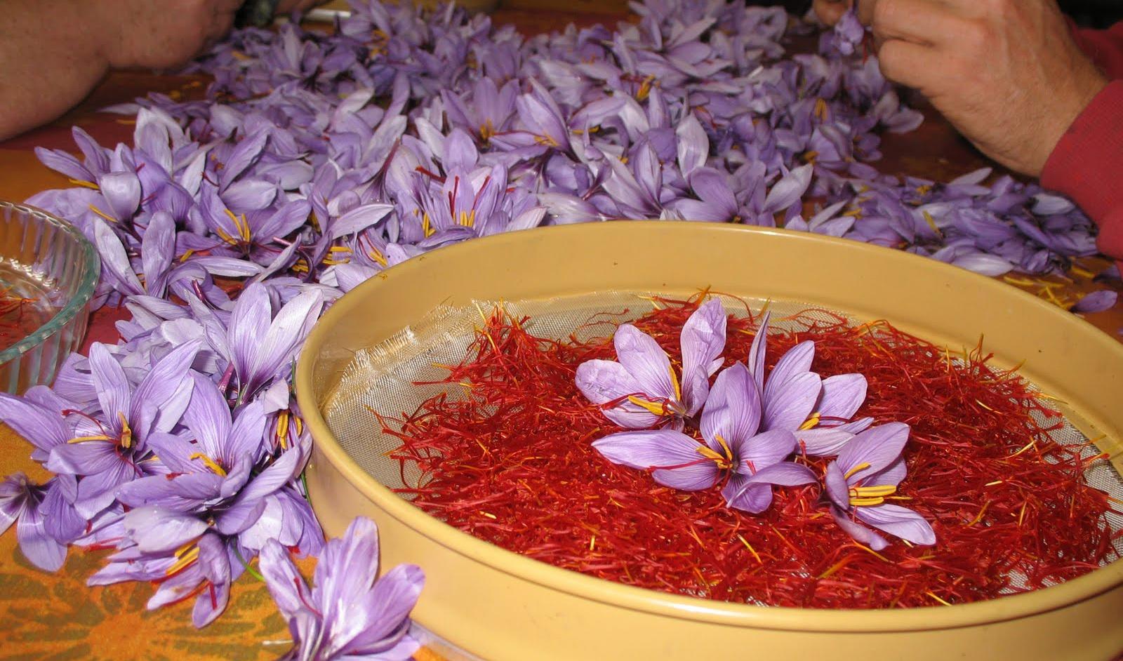 قیمت زعفران به ۱۰.۵ میلیون تومان رسید
