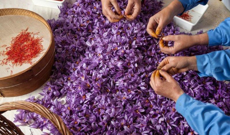 ورود تجار خارجی به امر خرید، صادرات زعفران را دچار مشکل کرد