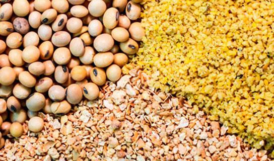 جهاد کشاورزی اعلام کند قادر به تامین نهادههای مرغداران نیست