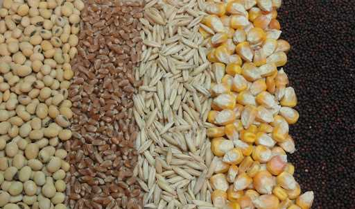 تامین ۷۰ درصد نهادههای دامداریها از بازار آزاد