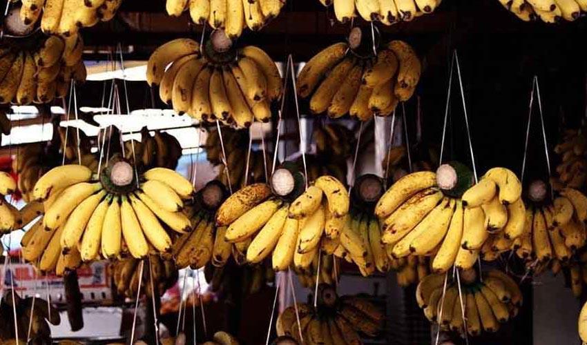 موز گران شد؛ کمبودی در عرضه میوه نداریم