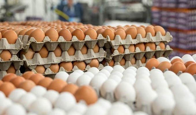 بهبود نسبی قیمت تخم مرغ در بازار؛ نرخ هر شانه تخم مرغ به ۱۸ هزار تومان رسید