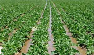 2 اشتباه دولت در افزایش قیمت کود/ دستان خالی کشاورز در جنگ با مشکلات تولید
