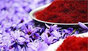 صادرکنندگان زعفران ۵۰۰ میلیارد تومان تسهیلات گرفتند